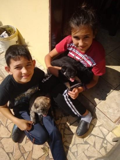 Foto: Arquivo Pessoal / Angela Alves Machado Francisco, de vermelho, e o irmão Enrico. Esses cachorrinhos são da vó das crianças.