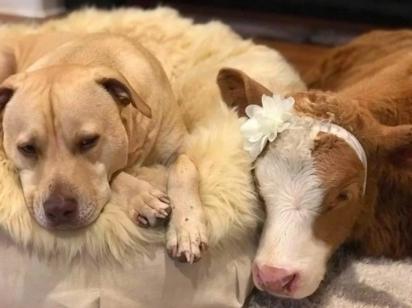 Harveigh se aconchega ao lado de um dos sete cães da família.