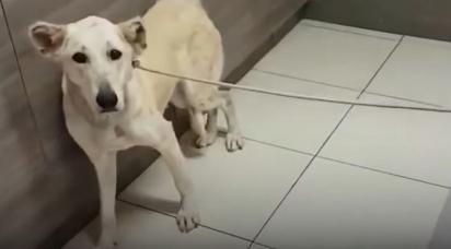 A cadelinha foi levada ao veterinário para ser sacrificada. (Foto: Reprodução Youtube/The Dodo)