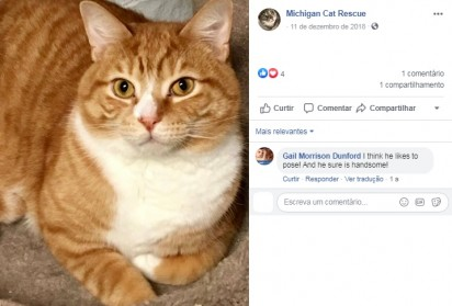 Foto: Facebook / Michigan Cat Rescue