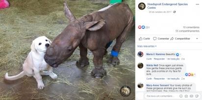 Foto: Facebook / Hoedspruit Endangered Species Centre