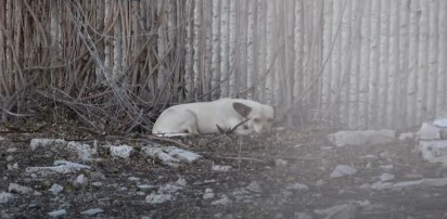 Foto: Reprodução Youtube / Hope For Paws - Official Rescue Channel