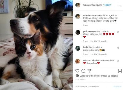 Foto: Instagram / minnieprincesspaws