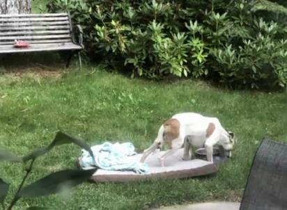 O cachorro Simon. (Foto: Reprodução / KRCR News Channel 7)