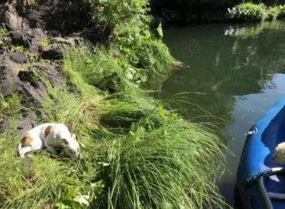 O cachorro foi encontrado deitado em uma rocha acima da margem do rio. (Foto: Reprodução / KRCR News Channel 7)