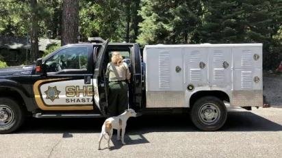 O Controle de Animais do Condado de Shasta levou a cão ao veterinário. (Foto: Reprodução / KRCR News Channel 7)