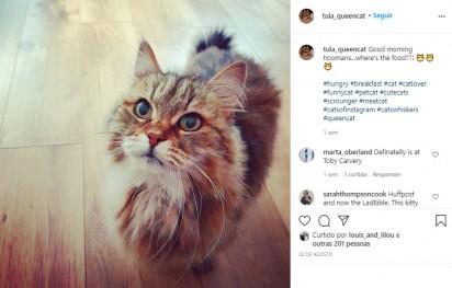 Foto: Instagram / tula_queencat