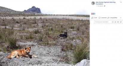 Foto: Facebook / New Guinea Highland Wild Dog Foundation