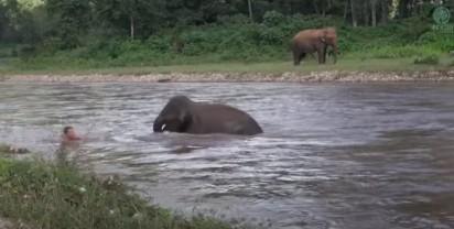Foto: Reprodução Youtube / elephantnews