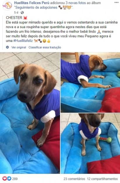 Foto: Facebook / Huellitas Felices Perú