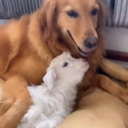 Foto: Reprodução Youtube / Viral Paws