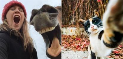 Foto: The Mars Petcare Comedy Pet Photo Awards 2020