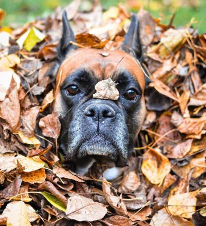 Foto: Reprodução / Pet Press