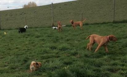 A cadela Lani, estava brincando no gramado da creche com outros cães quando sofreu um acidente e faleceu. (Foto: Reprodução/Daily Record)