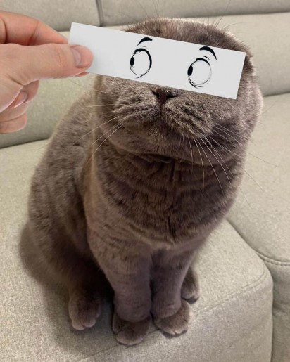 Foto: Instagram / atlas_scottish_fold