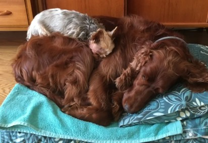 Foto: Reprodução / Mercury Press & Media Ltd Chloe se recuperando com a ajuda da sua irmã Lily