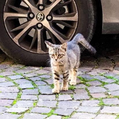 Taco conheceu a gatinha num passeio perto de casa. (Foto: Arquivo Pessoal / Delfina Plaja)