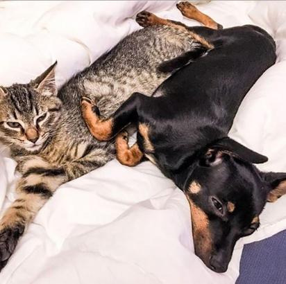 Quem iniciou a amizade foi a gatinha. (Foto: Arquivo Pessoal / Delfina Plaja)