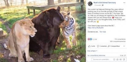 Amizade animal. Foto: Facebook / Noahs Ark Animal Sanctuary