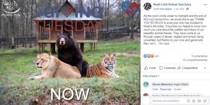 A amizade entre os três animais impressionou a todos. Foto: Facebook / Noahs Ark Animal Sanctuary