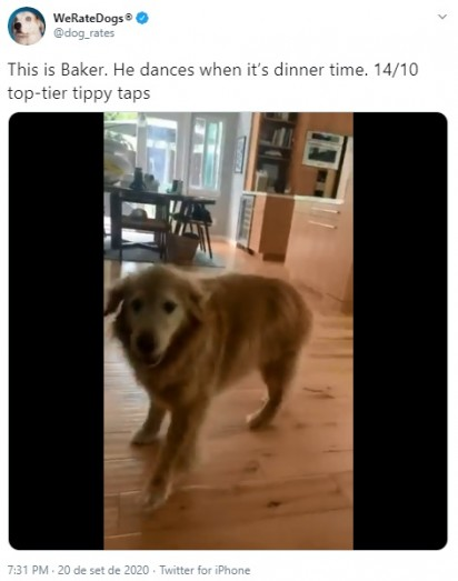 Foto: Reprodução Twitter / @dog_rates