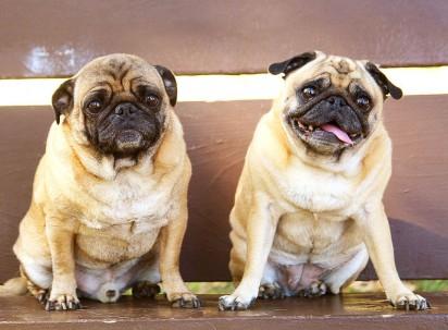 Foto: Reprodução / Notas de Mascotas