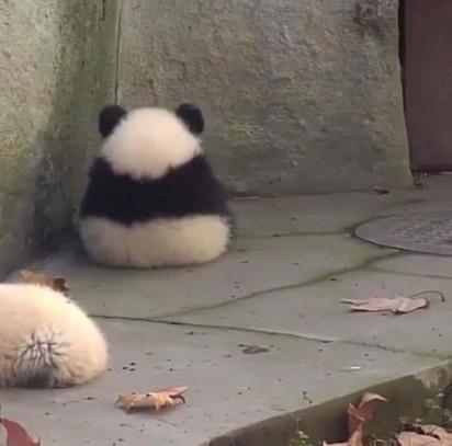 Foto: Reprodução / Bored Panda