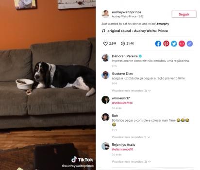 Folgado, o cãozinho leva sua tigela até sofá para comer em frente à TV. (Foto: Reprodução TikTok / audreywaitoprince)