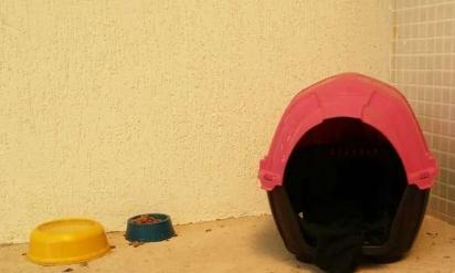 Foto: Edésio Ferreira/EM/D.A press O cachorrinho ganhou a doação de uma casinha. (Foto: Edésio Ferreira/EM/D.A press)