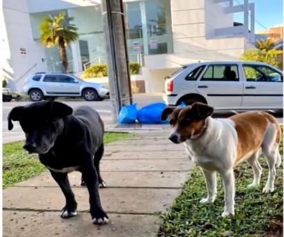 Foto: Reprodução / Bom Dia Rio Grande