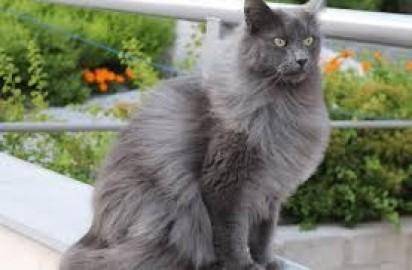 Foto: Reprodução / catunited