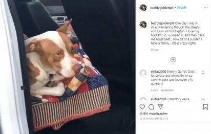Foto: Instagram / buddygoldenpit