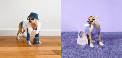 Boobie, a pet celebridade usando seus modelitos. (Foto: Instagram / boobie_billie)