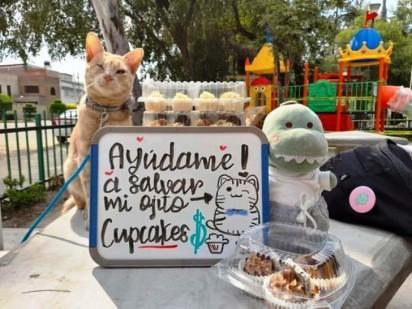 Foto: Facebook / Animalitos En Apuros