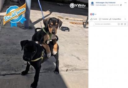 Foto: Facebook / Volkswagen City Chetumal