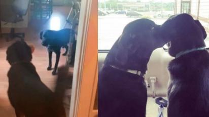 O cão Clark ajuda seu irmão a enfrentar os medos do dia a dia. (Foto: Arquivo Pessoal / Jessica Grider)