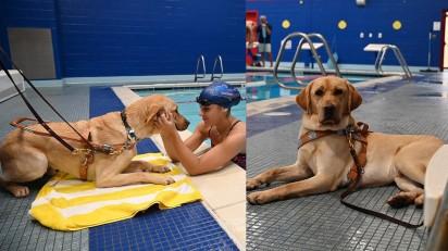 Foto: Cortesia / Guide Dog Foundation