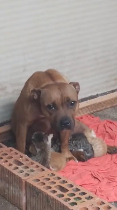 Foto: Reprodução Facebook / Animales Salvajes