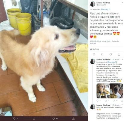 O sorriso do canino feliz por ter sido salvo. Foto: Twitter / @leomarg13