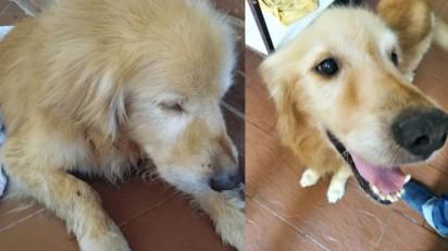 Antes e depois da adoção. Foto: Twitter / @leomarg13