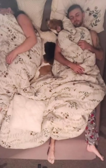 Cão Beagle Energetico