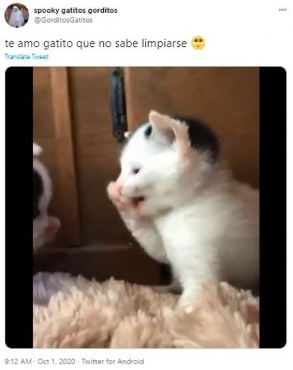 Gatinho recém-nascido, tentando se lamber, imitando o seu irmão. (Créditos: Reprodução Twitter/@GorditosGatitos)