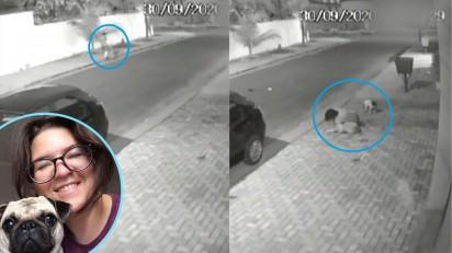 Cenas da câmera de segurança no momento em que o pit bull atacou a cadelinha pug  e a advogada o mobiliza. (Créditos: Arquivo Pessoal/Marina de Oliveira Galvão)