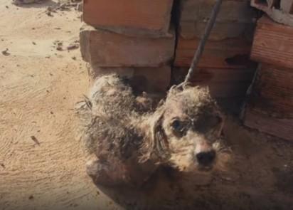 Estopinho foi encontrado em um terreno baldio todo machucado e preso em tijolos. (Foto: Arquivo Pessoal/Fernanda Suely da Costa)