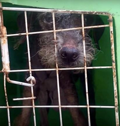 Estopinho foi resgatado e encaminhado para o Projeto Salvar. (Créditos: Arquivo Pessoal/Fernanda Suely da Costa)
