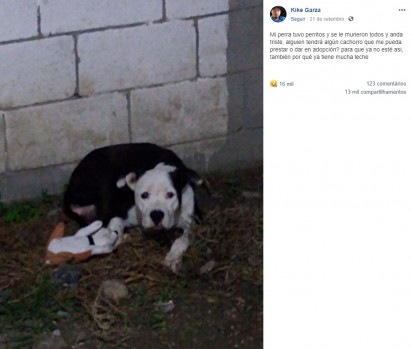 A cachorrinha entrou em depressão ao perder seus filhotes no parto. (Facebook/Kike Garza)