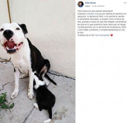 Sua dona, para consolar a cadela, adotou um filhote para que ela pudesse cuidá-lo. (Créditos: Facebook/Kike Garza)