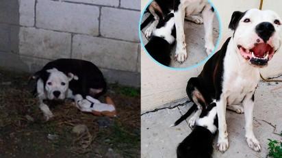 Cadela perde filhotes e sua dona adota um cachorrinho para consolá-la. (Créditos: Facebook/Kike Garza)