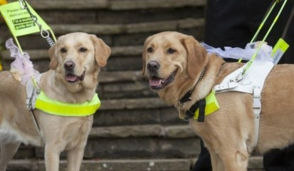 Os cães do casal Claire Johnson e Mark Gaffey. (Foto:The Guide Dogs For the Blind Association)