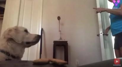 A dona do golden retriever dando ordem para que ele não coma os petiscos. (Foto: Reprodução Youtube/Videlo)